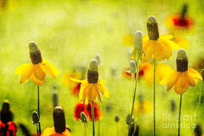 Photograph - Dancing Coneflowers by Marianne Jensen