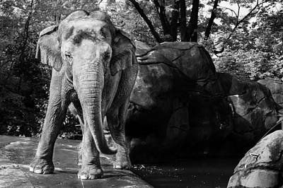 Elephant Photograph - Dancing Elephant by Keith Allen