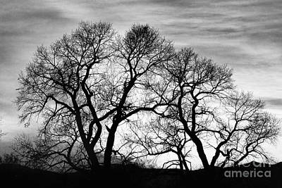 Decorative Photograph - Dancing Forest Trees In Black And White by James BO  Insogna