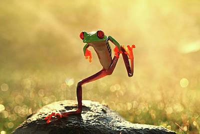 Photograph - Dancing Frog, Batam City, Riau Islands by Shikheigoh