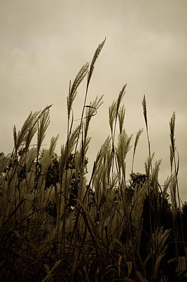 Frailty Photograph - Dancing Grass by Tgchan