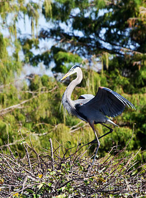 Photograph - Dancing Heron by Michelle Constantine