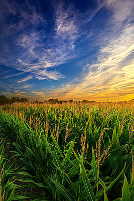 Scenic Photograph - Dancing In The Rows by Phil Koch