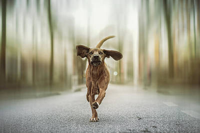 Cute Dog Wall Art - Photograph - Dancing In The Streets by Heike Willers