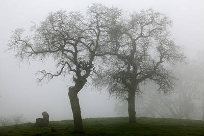 Dancing Oaks In Fog - Central California Art Print by Ram Vasudev