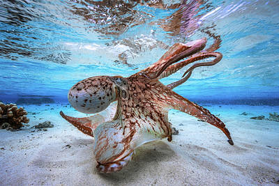 Beach Photograph - Dancing Octopus by Barathieu Gabriel