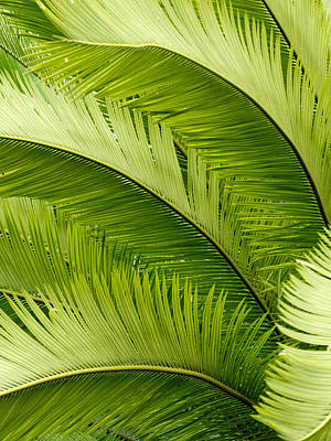 Dmx Photograph - Dancing Palm by Kendall Muyres