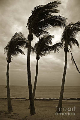 Photograph - Dancing Palm Trees - Key West Casa Marina by John Stephens