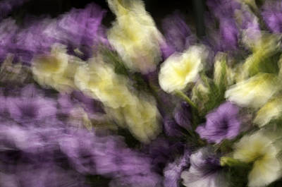 Photograph - Dancing Petunias by Curtis Dale