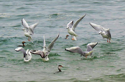 Photograph - Dancing Sea Birds by Deborah Smith