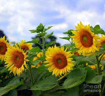 Dancing Sunflowers Art Print by Kathleen Struckle