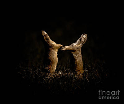 Phantom Dog Photograph - Dancing In The Moonlight by Robert Frederick