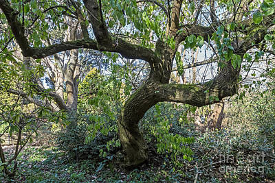 Photograph - Dancing Tree by Kate Brown