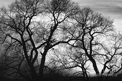 Dancing Trees Black And White Sunset Art Print by James BO  Insogna