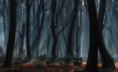 Sinister Photograph - Dancing Trees by Jan Paul Kraaij