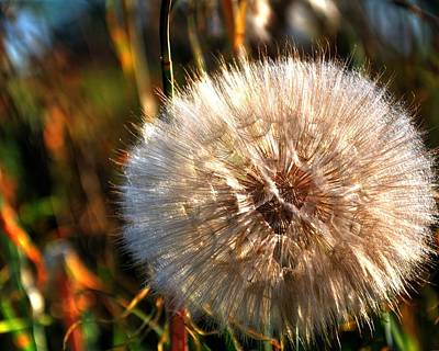 Photograph - Dandelion 15780 by Jerry Sodorff