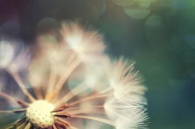 Photograph - Dandelion - Rainbow Bokeh by Marianna Mills