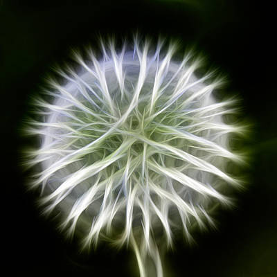 Photograph - Dandelion Abstract by Omaste Witkowski