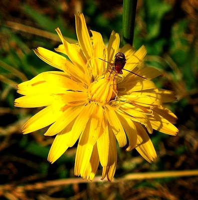 Dandelion And Bug Art Print by Pete Trenholm