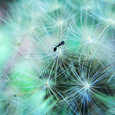 Photograph - Dandelion Ant by Candice Trimble