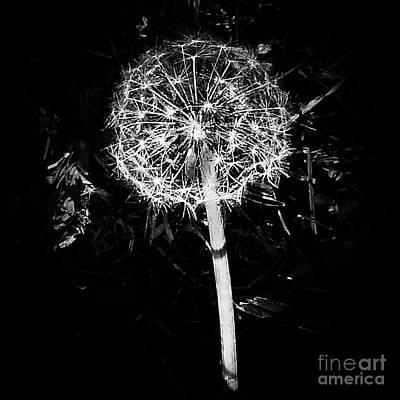Photograph - Dandelion B W by Fei A