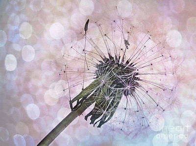 Weed Digital Art - Dandelion Before Pretty Bokeh by Kaye Menner