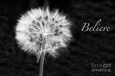 Photograph - Dandelion Black And White by Jim And Emily Bush