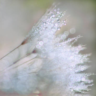 Photograph - Dandelion Bling Bokeh by Peggy Collins