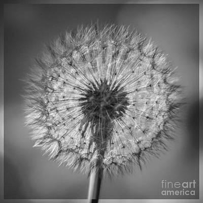 Dandelion Print by Bryan Freeman