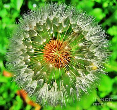 Dandelion Circle Art Print by John King