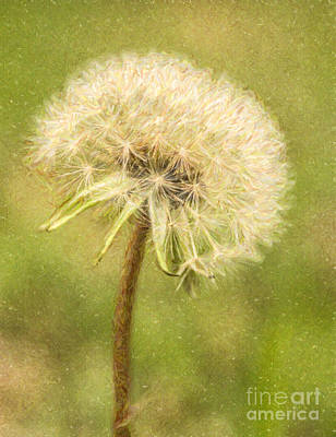 Digital Art - Dandelion Clock by Liz Leyden