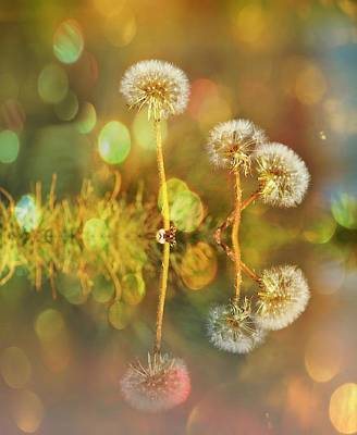 Dandelion Delight Art Print