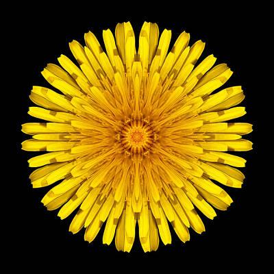 Dandelion Flower Mandala Art Print