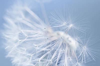 Photograph - Dandelion Fly Away Blue by Jennie Marie Schell