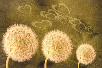 Dandelion Heads Art Print