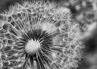 Photograph - Dandelion In Black And White by Leah Palmer