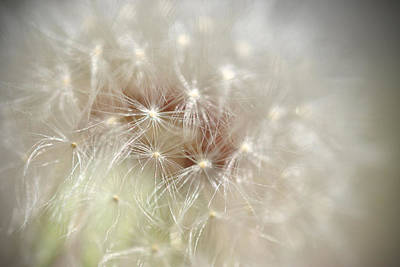Photograph - Dandelion by Kathy Williams-Walkup