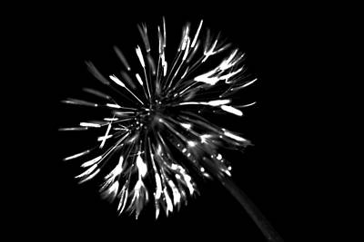Photograph - Dandelion Luminati by  Tina McGinley