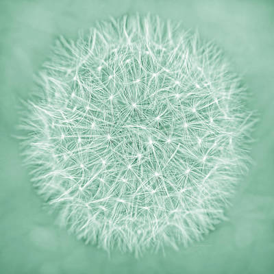 Photograph - Dandelion Macro Abstract Soft Green by Jennie Marie Schell