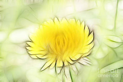 Dandelion Art Print by Michal Boubin