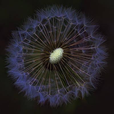 Dandelion Nebula Print by Kathy Clark