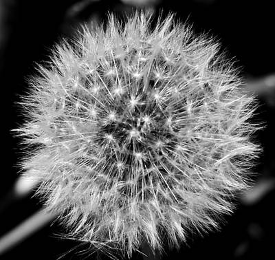 Photograph - Dandelion Nebula by Thomas Samida