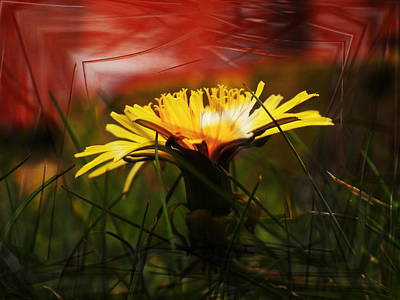 Photograph - Dandelion by Nigel Watts