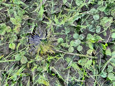 Digital Art - Dandelion by Richard Barone