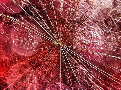 Photograph - Dandelion Seed Abstract by Marianna Mills