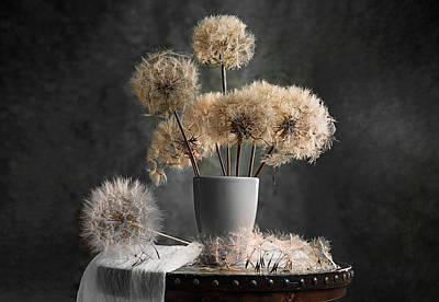 Dandelion Wall Art - Photograph - Dandelion Seed Pod by Lydia Jacobs