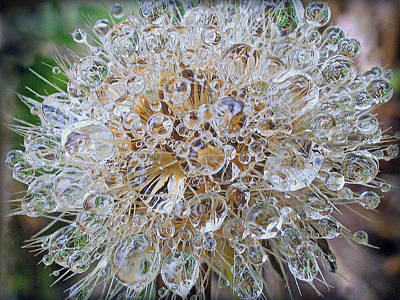 Photograph - Dandelion Seed Prisms by Suzy Piatt