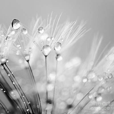 Dandelion Seed With Water Droplets In Black And White Art Print by Natalie Kinnear
