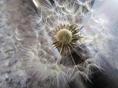 Photograph - Dandelion Seeds by Joyce Woodhouse