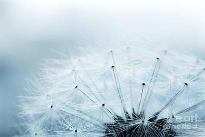 Mythja Photograph - Dandelion Seeds by Mythja  Photography